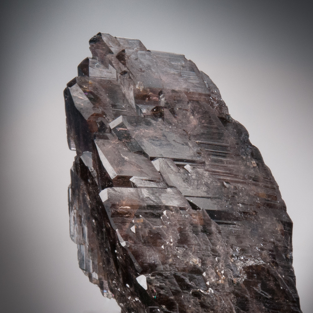 Axinite-(Fe), Bor Pit, Dal'negorsk, Primorskiy Kray, Russia