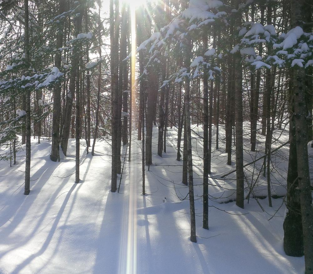 SnowWoods 2