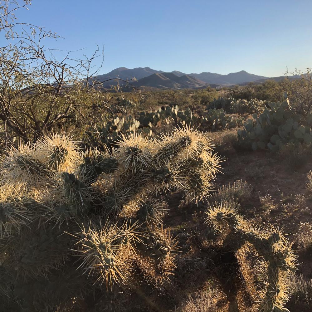 Cactus hills